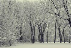 Winter in Kansas City - beautiful snow covered trees! State Of Kansas, Kansas City, Snow Forest, Splendour In The Grass, Snow Covered Trees, Land Of Oz, Home Of The Brave, Land Of The Free, Winter Fun
