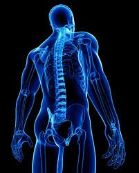 16 Best Spinal Cord Injury Physical Rehabilitation images in