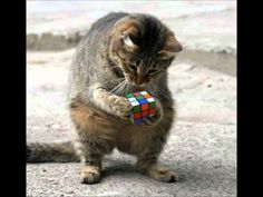 The cat guesses the puzzle