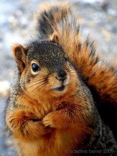 very cute squirrel