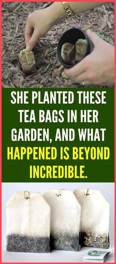 Grow Vanilla Beans, Used Tea Bags, Garlic Bulb, Starting A Garden, Tired Eyes, Small Space Gardening, Urban Gardening, Organic Gardening, Container Gardening