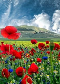 CARPE DIEM — coiour-my-world: Piana di Castelluccio by...
