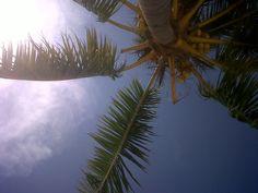 #palm #ochi #jamaica #prettyisland Ocho Rios, Tropical Vibes, Jamaica, Caribbean, Palm, Clouds, River, Island, Pretty
