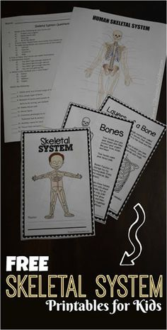 FREE SKeletal System for Kids Worksheets perfect for learning bones for kids and about human body activities for kids homeschool first grade grade grade grade grade grade science First Grade Science, Middle School Science, Elementary Science, Teaching Science, Science Classroom, Science Education, 4th Grade Science Lessons, First Grade Curriculum, Science Today