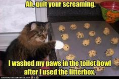 Dump A Day Beware Of Animals With Funny Captions - 28 Pics- This one made me crack up!