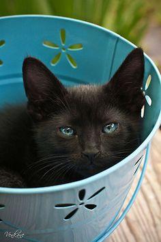 Nevena Uzurov - Kitty by venkane