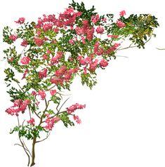 arbre Blooming Trees, Flowering Trees, Landscape Elements, Landscape Design, Tree Plan Png, Pinterest Garden, Tree People, Landscaping Trees, Photoshop