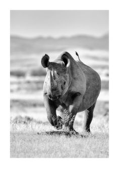 Check out this amazing black and white wildlife photography! Animals Black And White, Black And White Pictures, Black White, Wildlife Photography, Animal Photography, Desert Animals, Black And White Landscape, African Animals, Wildlife Art