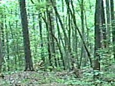 The Michael D. Greene Sasquatch Research Site. Bigfoot Sightings, Plants, Plant, Planets