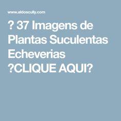 → 37 Imagens de Plantas Suculentas Echeverias 【CLIQUE AQUI】