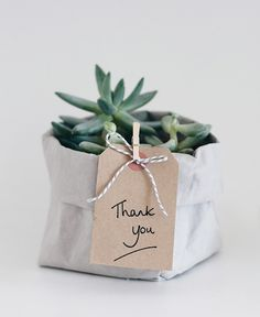 Have a look at our favorite succulent products. In this shop, you will find our ebooks, and affiliate links to succulent products. Cactus E Suculentas, Decoration Plante, Plants Are Friends, Diy Inspiration, Deco Floral, Green Gifts, Cacti And Succulents, Thank You Gifts, House Plants