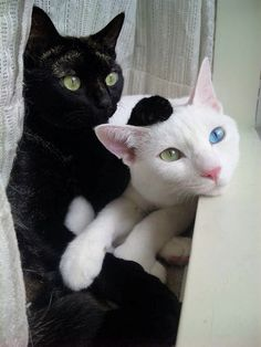 The white one looks just like ghost :)
