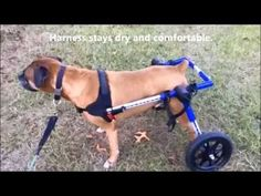 Handicapped Pets - Adjustable Dog Wheelchair for Handicapped & Disabled Pets
