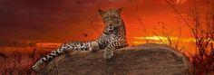 Puzzle HEYE: Puzzle de 2000 piezas Leopardo sobre roca, amanecer - Alexander Von ( Ref: 0000029608 ) en Puzzlemania.net