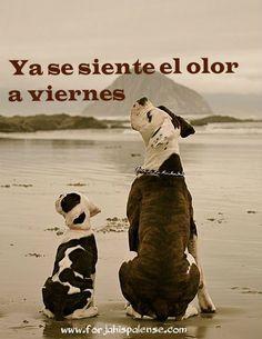 #viernes  www.forjahispalense.com