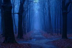 Image uploaded by Amanda. Find images and videos about photography, fall and tree on We Heart It - the app to get lost in what you love. Paradise Pictures, Twilight Sky, Autumn Photography, Places Around The World, Pathways, Beautiful World, The Great Outdoors, Mists, Mystery