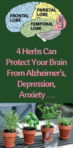 These 4 Herbs Can Protect Your Brain From Alzheimer's, Depression, Anxiety And Much More – headmos. Health Facts, Health And Nutrition, Health And Wellness, Health Tips, Health Fitness, Natural Health Remedies, Natural Cures, Natural Healing, Herbal Remedies