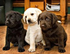 I want all three of these pups!