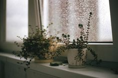 I want to start an herb garden.