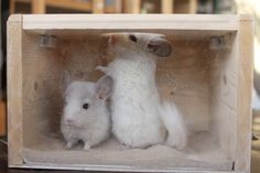 Chinchilla Wooden Dust Bath TV with front plexiglas screen and top entry point by Lenwoood on Etsy. Cage Chinchilla, Chinchilla Care, Chinchillas, Ferret Toys, Bear Hamster, C&c Cage, Classroom Pets, Super Cute Animals, Pet Store
