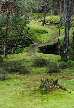 Green Sea // Pathway winding through the moss garden at Saihou-ji … Beautiful World, Beautiful Places, Forest Path, Dark Forest, Magical Forest, Walk In The Woods, Amazing Nature, Pathways, Beautiful Landscapes