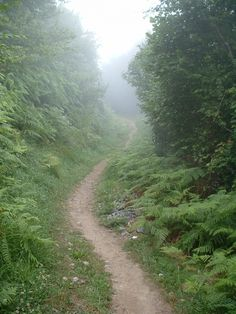 Path on the Camino