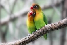 Romantic Animals - These Are The World's Most Romantic Animals Romantic Animals, Funny Bird, Baby Animals, Cute Animals, Cute Birds, African Animals, Colorful Birds, Wild Birds, Love People