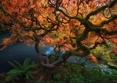 Autumn Serenity by Yanbing Shi on 500px
