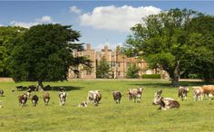 Quenby Hall (in England)