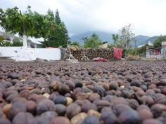 Panajachel. Coffeebeans. Guatemala.