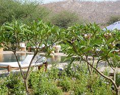 Anopura member of Secret Retreats Jaipur India, Wide World, Hotels Near, Plants, Travel, Ideas, Viajes, Destinations, Plant