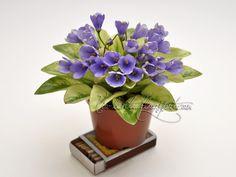Н-Аватар (Н.Бердникова) Saintpaulia, Violets, African Violet, Miniatures, Av, Trail, Gardens, Indoor, Image