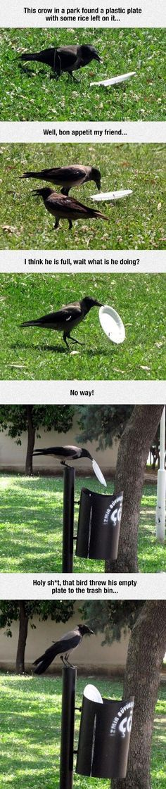 This Crow Is Better