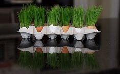 grassy eggs!