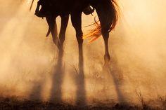 SALE Horse Photography 11x14. $30.00, via Etsy.