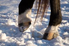 Striped_Hooves_on_Snow