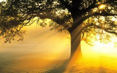 Underneath the sunrise me where your love lies. Underneath the sunrise Tree Curtains, 7 Chakras, Meditation Music, Meditation Youtube, Guided Meditation, Oscar Wilde, Angst, Image Hd, Sky High