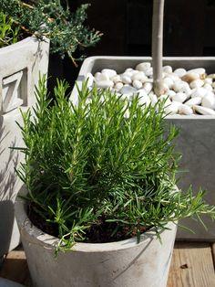 Så rätt med den gråa betongen mot naturstenar och gröna växter (rosmarin)