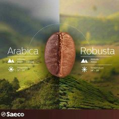 Arabica and Robusta