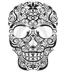 skull reference drawing - Google Search