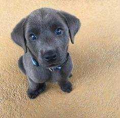 Chien mignon Chien dog Cute Dog Beautiful dog Pretty dog Cool dog Cute dog pictures Cute dog Video Satisfying Satisfaisant Kawai dog Doggydog Cute dogs Cute dogs in the world Cute dog breeds Cute dogs small Cute dogs pics Cute dogs ever Puppies Puppy Cute Baby Animals, Animals And Pets, Funny Animals, Funny Dogs, Farm Animals, Cute Dogs And Puppies, Little Puppies, Doggies, Puppies Puppies