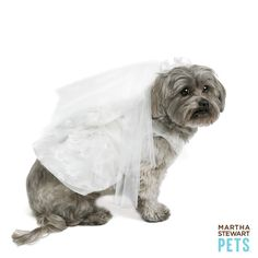 Down-the-aisle-style with the #MarthaStewartPets Wedding Dress & Veil only @petsmartcorp | #petwedding #dogdress