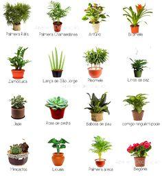 Dicas de plantas para montar seu jardim de Inverno