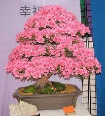 Resultado de imagen para como fazer bonsai