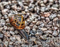 Taking Photos Photography Snail Snail Garden When Boredom Strikes.   EyeEm