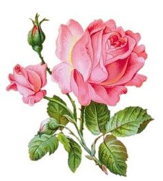 floristas8.jpg (348×387)