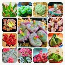 Image result for кактусы и суккуленты в саду