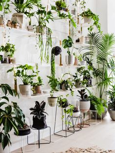 Ivy Muse · Botanical Emporium — The Design Files | Australia's most popular design blog.