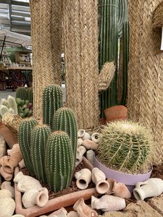 Kakteen, es gibt so viele verschiedene Sorten!  Bist du auch ein Kakteen-Liebhaber? Kakteen liebe Trockenheit und Hitze, also perfekt für die Sommermonate! Cactus Plants, Around The Worlds, Instagram, Succulents, World, Plants, Summer, Amor, Flowers