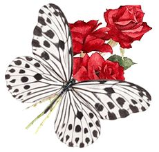Sentimentos Amor & Poesias ♥♥: 06/03/13